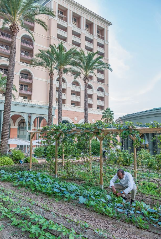 Jardin potager Monte-Carlo Bay Hotel and Resort