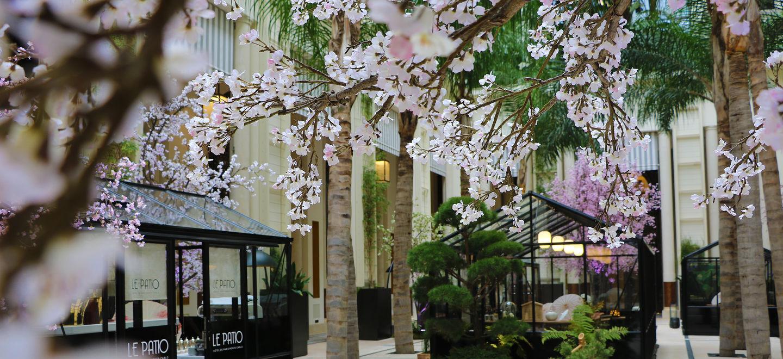 Hôtel de Paris - Patio - Cherry Blossom - 2021