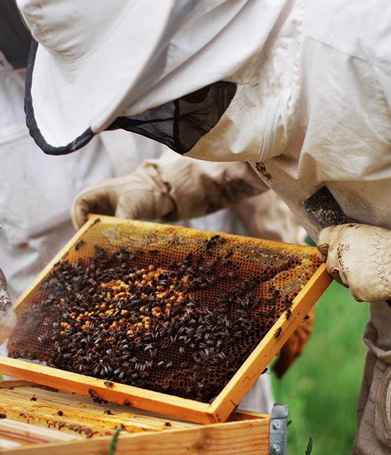 miel-monaco