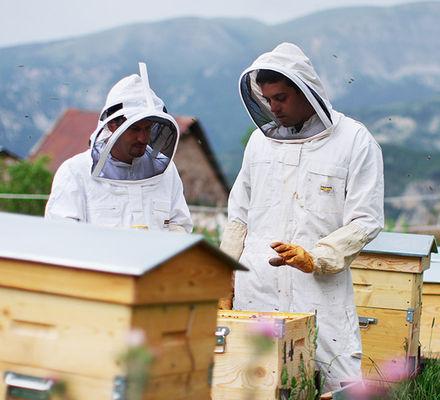 Honey Bee site de rencontre